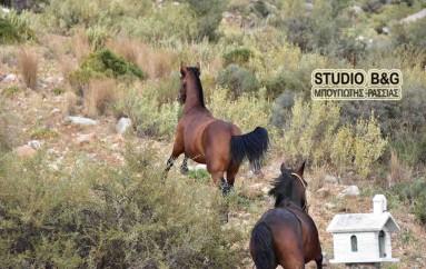 Παραλίγο ατύχημα με άλογα κατά τη διάρκεια Λιτανείας (ΦΩΤΟ – ΒΙΝΤΕΟ)