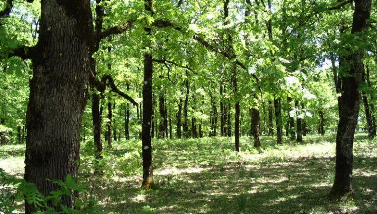 """""""Η καλλιέργεια του δάσους"""" του Καθηγουμένου της Ι. Μονής Δοχειαρίου"""