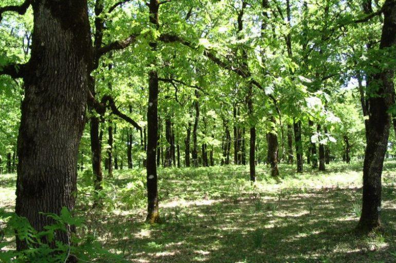 «Η καλλιέργεια του δάσους» του Καθηγουμένου της Ι. Μονής Δοχειαρίου