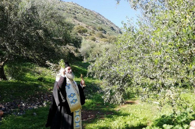 Αγιασμός για την έναρξη της συγκομιδής ελαιοκάρπου στην Μάνη (ΦΩΤΟ)