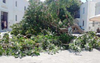 Πάρος: Δέντρο έπεσε στην είσοδο της Εκατονταπυλιανής και πλάκωσε άνθρωπο