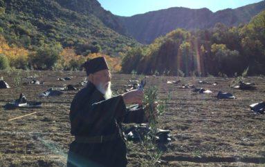 Ο Μητροπολίτης Μαντινείας μπροστάρης στο φύτεμα 800 δένδρων ελιάς